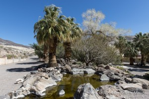 An oasis in Death Valley! Scotty's Castle, Death Valley National Park, California