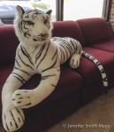 Watch where you sit … there's a tiger in Provan's showroom!