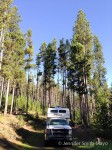 Many Pines Campground, Lewis & Clark National Forest, Neihart, Montana