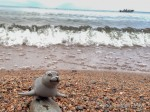 After lunch, Guy chills out on the Leech Lake shore in Minnesota.